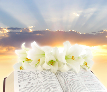 Photo of an open Bible with white flowers